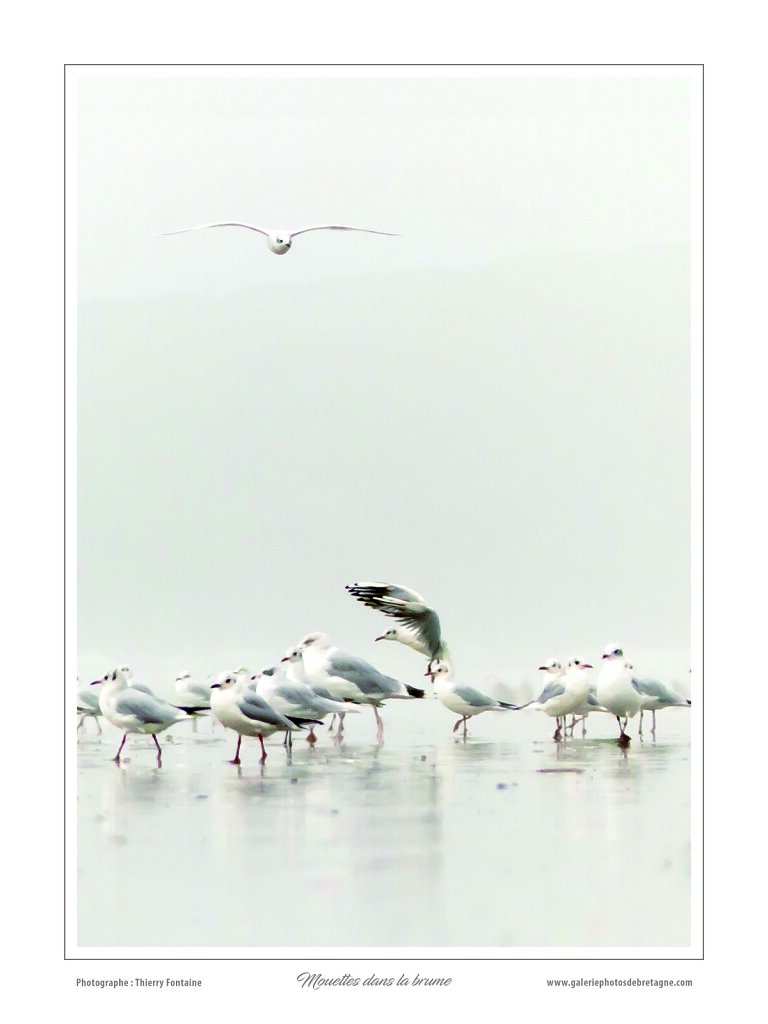 poster-30x40-MOUETTES.jpg